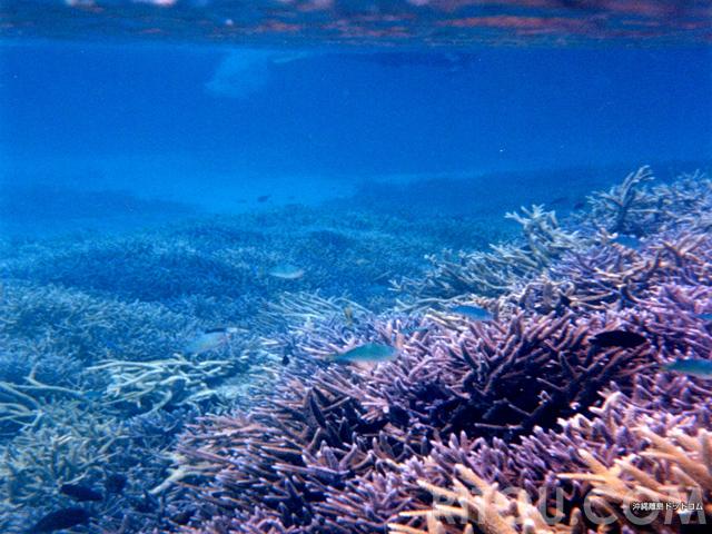沖縄のグレートバリアリーフ!宮古島沖の八重干瀬は世界遺産レベルの巨大珊瑚礁