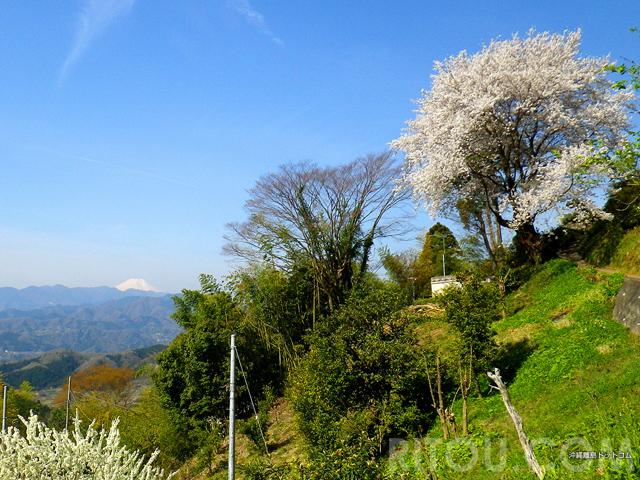 高尾山で「さくら縦走」奥高尾まで行けば桜と富士山の絶景フルコース