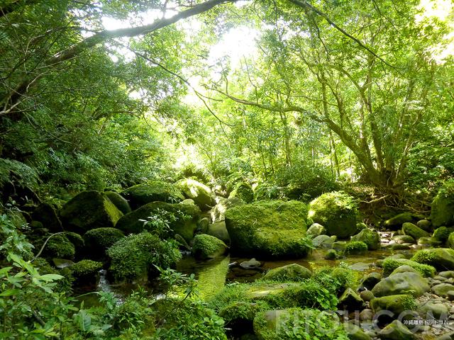 沖縄版もののけの森!西表島・ユツンの滝への道のりは超幻想的