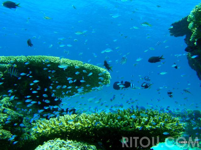 ケラマで水中遊泳!沖縄・阿嘉島シュノーケリングポイント4選で海の中を満喫
