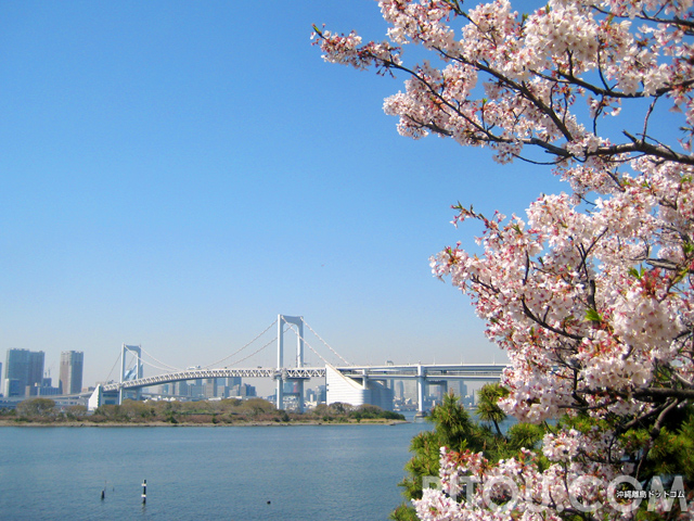桜花見スポット東京都心穴場8選!都心生まれがおすすめの絵になる桜名所