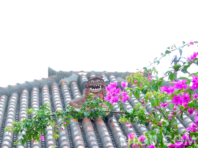 梅雨でも楽しい「竹富島シーサー巡り」!石垣島で雨なら竹富島へ行こう!!
