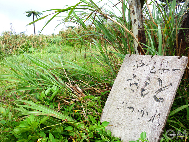 沖縄で一番高い山は石垣島に!?県内最高峰の於茂登岳に登って沖縄ナンバーワンの場所に立とう