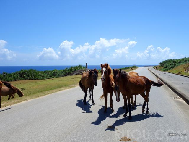 島の道は馬優先!日本最西端の与那国島ではヨナグニウマに道を譲ろう!!