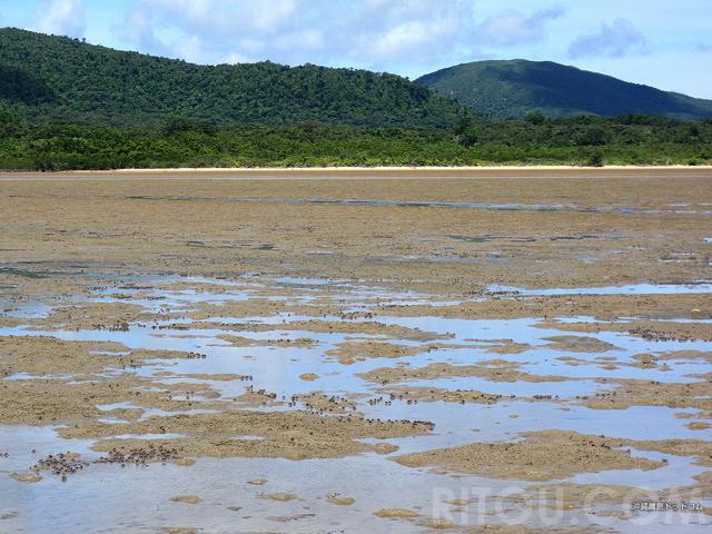見たこともない生き物だらけ!沖縄・西表島の干潟は生命の玉手箱