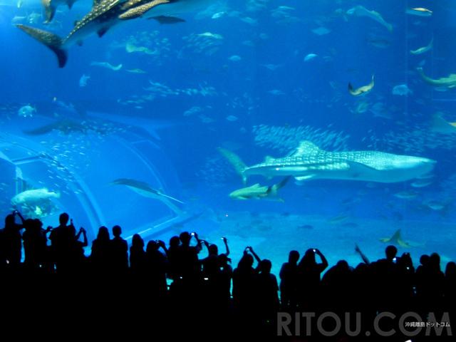 水族館もいいけど温泉・ジャングル・離島もいかが?沖縄本島で雨でも楽しめるおすすめ情報