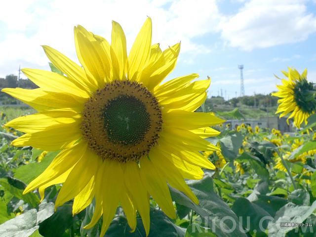 沖縄の冬といえば花!カラフルな5つの花々で身も心もぽかぽか