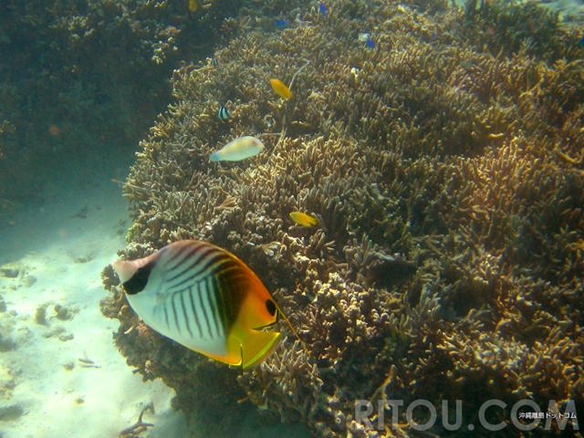 那覇から30分で珊瑚と熱帯魚!大度浜海岸/ジョン万ビーチで泳ぐ