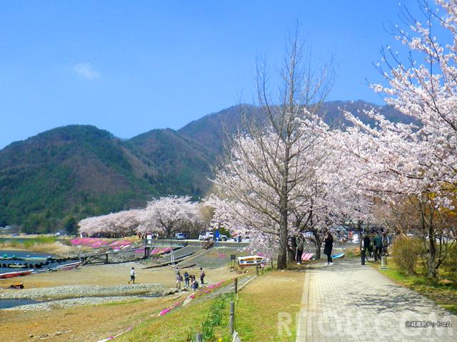 河口湖で桜満喫!空気の澄んだ高原の湖畔で花見をしよう