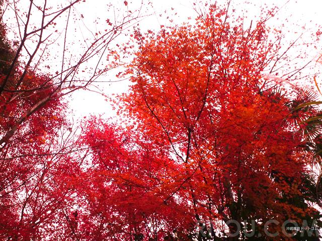 塔ノ岳で紅葉登山!都心から90分で晩秋を堪能